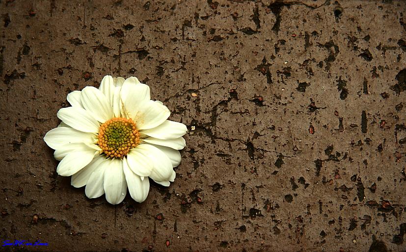 @ Sentosa Flower Show