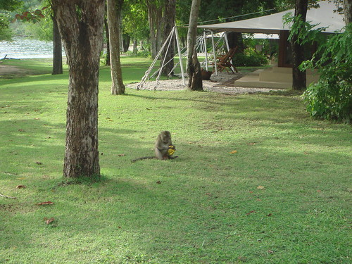 campground moyo island