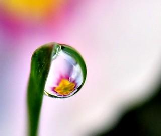 Dew Drop Refraction