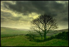 Before The Storm (andrewlee1967) Tags: uk england tree landscape lancashire fields beforethestorm andrewlee canon400d andrewlee1967 superbmasterpiece focusman5