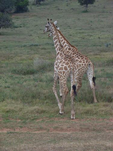 Sydafrika feb 2007 279