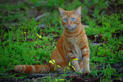 Orange cat with an 'orange' name? | Orange Cats | Flickr