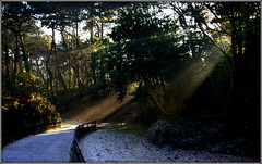 Morning has broken (* RICHARD M (Over 5.5 million views)) Tags: sunrise sunbeams rays sunrays lightrays lightandshade shadows frost frozen cold winter winterweather november coldweather daybreak dappled dappling dappledlight wintersun sunshine groundfrost paths pathways trees railings streamingsunlight sunlight sunlit heskethpark parkland parks publicparks southport sefton merseyside scapes nature landscape landscaping landscaped wintertime steps stonesteps grass shrubs shrubbery nook shadynook peaceful peaceandquiet serenity sunlightshafts sunnysouthport frosty frostymorning prismatic diffusedlight diffusedsunlight backlight backlighting backlit contrejour mist misty idyll idyllic tranquil tranquility serendipity happiness