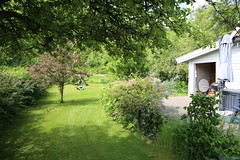 Erling klipper plenen (fotomormor) Tags: hønefoss hjemme trær busker grønt