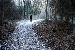 Step Into Winter (M J M) Tags: park winter light white snow cold tree forest dark walking person woods path horizon mendon rochester trail mjm hiker d200 ponds
