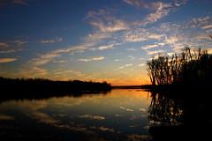 Clouds In The Water ⅩⅤ (mightyquinninwky) Tags: trees sky water clouds reflections evening december kentucky lexingtonky richmondroad fayettecounty centralkentucky ellserlielake