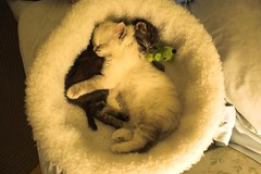 New Additions (Mark Veitch) Tags: new light white black green tag3 taggedout toy bed tag2 babies tag1 sister brother sleep kittens rest additions