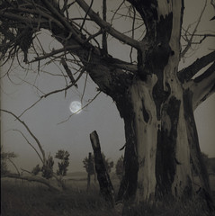 Dechambeau Tree (susafri) Tags: california moon tree night fuji hasselblad dechambeau npl mononight2006