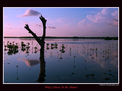 .::Y?::. [Bali SerieS #1] (w1ll14m09) Tags: bali tree nature landscape