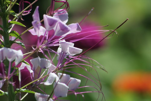 July: Flowers