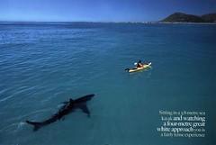 Shark & Kayak - by misterbisson