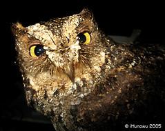 Suara Burung Sulawesi