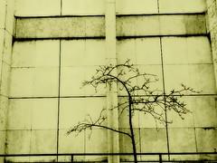 betonwand (stoha) Tags: berlin concrete december dezember beton dahlem zehlendorf smpk guessedberlin stoha gwbmajorette staatlichemuseen