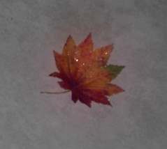 Simple Leaf (ChriswCollins) Tags: autumn red brown inspiration fall beauty writing leaf write inspire