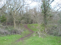 If you go down in the woods today ... (twinbowlers) Tags: trees tree grass woods geocaching path chocolate hill cadbury geocache cache geo northsomerset garmin treasurehunt yatton claverham cadburyhill