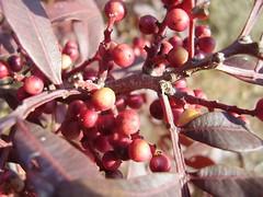 imagem alojada em www.flick.com