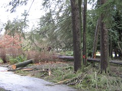 """stanley park mess • <a style=""""font-size:0.8em;"""" href=""""http://www.flickr.com/photos/70272381@N00/343519655/"""" target=""""_blank"""">View on Flickr</a>"""