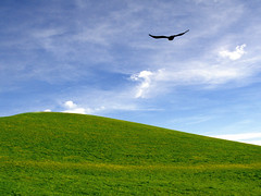 Green hill - blue sky -  clouds - black bird (rotraud_71) Tags: sky nature clouds geotagged hill meadow bgl fhn berchtesgadenerland hgl blackdow p1f1 shieldofexcellence impressedbeauty