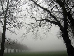 Haar 1/7 (photojennic) Tags: park uk trees mist home beautiful weather fog tag3 taggedout scotland nice edinburgh tag2 moody niceshot tag1 britain hometown gorgeous great meadows silhouettes scottish neighborhood attractive stunning excellent mostinteresting greatshot mystical lovely neighbourhood themeadows haar photojennic beautiful3 msh0608 msh060820 thephotoproject