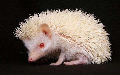 Aves del Paraiso y Animales Albinos