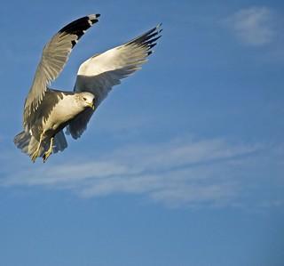 gull stops