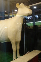 The Iowa State Fair Butter Cow