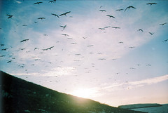 ¿Cuantas aves ves? (Adolfo Montes) Tags: sunset paisaje aves nayarit isabel isla animalplanet