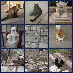Cats of Turkey (Photomosaic) (Gibna Kebira) Tags: cats turkey catwomen fdsflickrtoys kitties 200views photomosaics dec2006 cc100 jan2007 cv50january212007 cv75january302007 cc100february22007