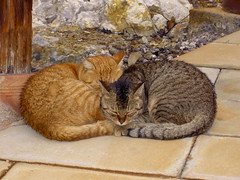 "2007.01.06 - 15 - Unzen Jigoku - ""Yin-Yang"" twins (drayy) Tags: sleeping food japan cat twins sleep sashimi newyear sleepy yang together onsen neko fukuoka yin 猫 saga hotsprings kumamoto oita kyushu karatsu 九州 hakata 温泉 basashi shimabara supershot sleepingtogether cc800 cc700 cc400 cc300 cc200 cc100 cc500 cc1500 cc1300 cc1000 cc600 cc900 cc1400 cc1200 cc1100 catspotting cc1800 cc1700 cc2000 雲仙地獄 kissablekat cc2100 oreengeness cc1600 cc1900 bestofcats thebiggestgroupwithonlycats catmoments 猫ダンゴ 猫団子 catnipaddicts"
