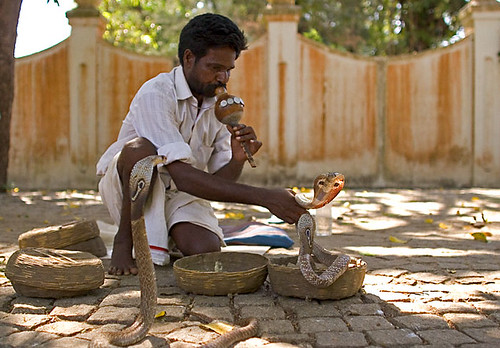 Snake Charmer with Cobras at Kochin in India