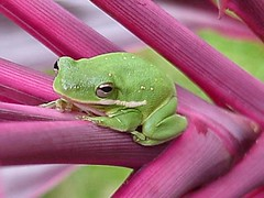 January Frog in the Tai Plant