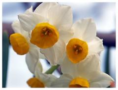 Flower 070126 #03