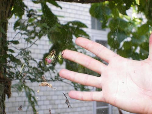 Spider! (4)