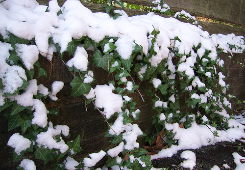 ivy — Feb. 2