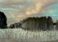 Landscape in wintertime (Per Ola Wiberg ~ Powi) Tags: trees winter sky snow reed nature clouds bravo niceshot sweden 100v10f loveit harmony excellent sn shiningstar trd 2007 moln naturegroup vass blueribbonwinner phragmitesaustralis commonreed justonelook supershot mostintresting eker beautyisintheeyeofthebeholder theworldinmyeyes goldenmix ekebyhov flickrsmileys mywinners abigfave royalgroup peaceaward colorphotoaward holidaysvacanzeurlaub bryggavgen amazingshots superbmasterpiece hsthagar photosandcalendar diamondstars eperke exemplaryshotsflickrsbest onlynatureaward justlovelyphotos goldsealofquality natureislife theperfectphotographer naturestyle crazyaboutnature thebestshot funfanphotos photossansfrontires highqualityimage qualitypixels beautifulshot flickrballoonaward oletusfotos thelightpainterssociety panoramafotogrfico photographerparadise ~newenvyofflickr~ artofimages saariysqualitypicturesgallery ilikethenature naturesprime bestpeopleschoice thebestshotplatinumaward thenaturessoul 2heartsaward photographersworld