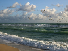 Morning Waves (mcmillend) Tags: sunrise bravo florida miami southbeach impressedbeauty qemdadminfave