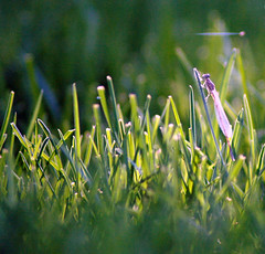 (Socos) Tags: grass fly perspective byg dsc0126