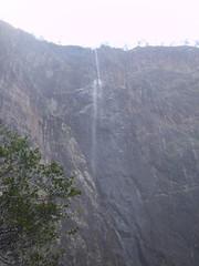 Misty (robstephaustralia) Tags: rain forest puppy waterfall bush great mastiff scenic australia hike falls trail jungle queensland outback dane wallaman