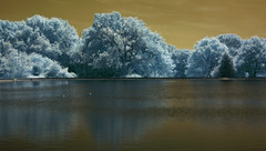 DSC_0046 (a.rutherford1) Tags: blue trees colour digital ir nikon forsale sale hampshire email infrared southampton common false hoya r72 emailphotosfromflickrgooglemailcom photosfromflickrgooglemailcom arutherford1