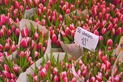 Flores Amsterdam