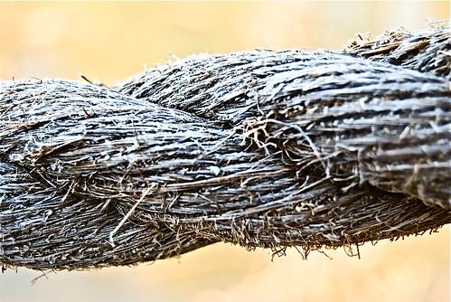Three Fold Cord