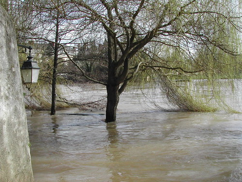 willow flooded