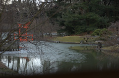 Filtered View, Japanese Garden, BBG
