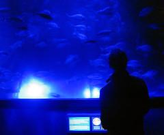 Mnchen SeaLife - blauer Raum - Dark Man, Blue Fish (humpelbein) Tags: blue sea lake fish catchycolors munich mnchen aquarium sealife olympiapark