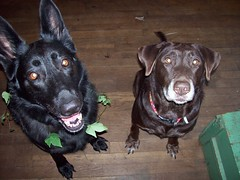 Jazz and Gracie (peaceswirl) Tags: love dogs faces joy blackandbrown