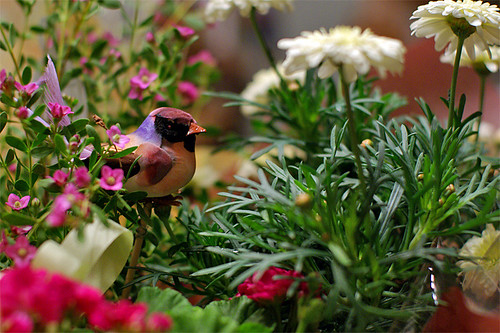 a Bird and Flowers