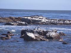 Sydafrika feb 2007 457