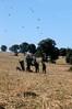 Spain Ibex Hunt & Driven Partridge Hunts 30