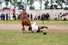 He Didnt Get Kicked (fayesta) Tags: travel horses horse latinamerica argentina rodeo gauchos salta doma jineteada