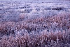 Frosty morning (Shemya) Tags: kazakhstan  tengiz
